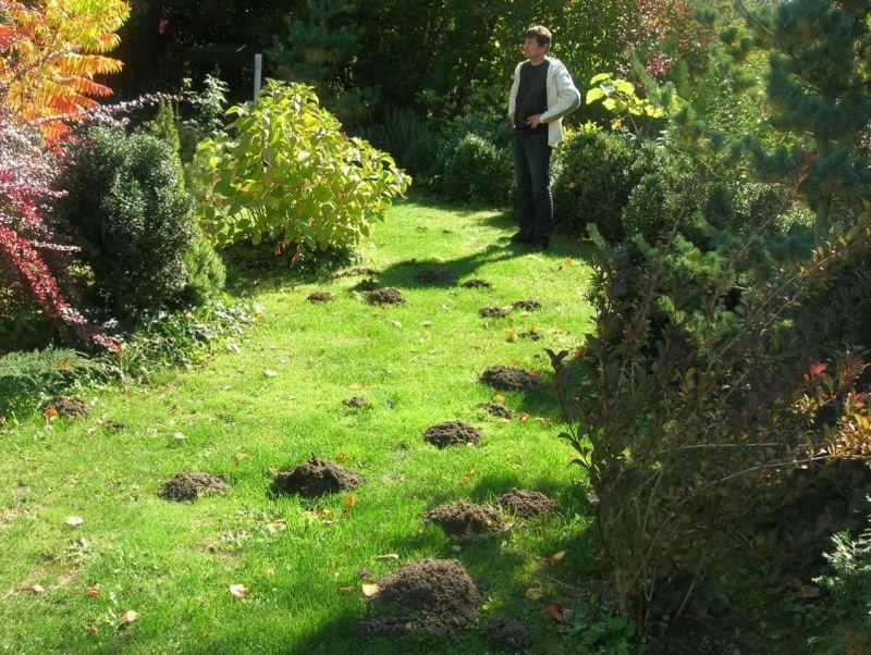 Come eliminare le talpe in giardino affordable trappola a molla per talpe x with come eliminare - Allontanare i gatti dal giardino ...