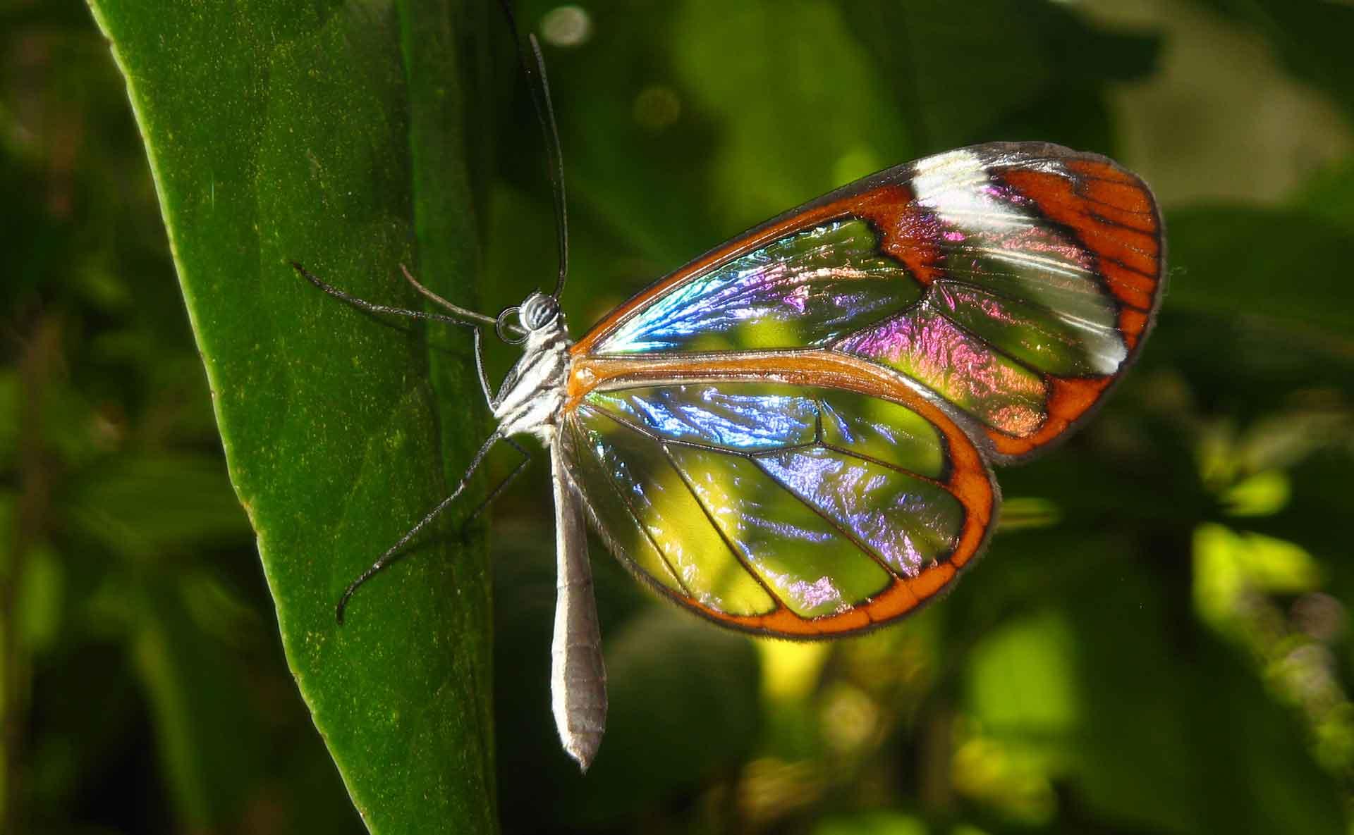 Mariposas del mundo Los nombres de las mariposas y su descripción ...